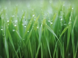 Wet grass Photographic Print by Michael Keller