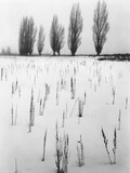 Snowy Landscape Photographic Print by Brett Weston