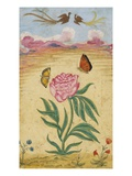 Mughal Miniature Painting Depicting a Peony with Birds of Paradise and Butterflies Reproduction procédé giclée par Stapleton Collection