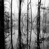 Reflection of Swamp Photographic Print by David H. Wells