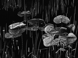 Swamp, Alaska, 1977 Photographic Print by Brett Weston