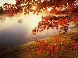 Sunrise Through Autumn Leaves Photographie par Joseph Sohm