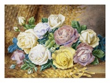 A Still Life of Roses Premium Giclee Print by Thomas Frederick Collier