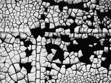 Cracked Paint Photographic Print by Brett Weston