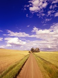 Dirt Road Stretching Under Cloudy Skies Photographic Print by Craig Tuttle