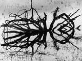 Stump, Alaska, 1973 Photographic Print by Brett Weston
