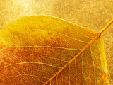 Autumn Leaf Photographic Print by Danilo Calilung