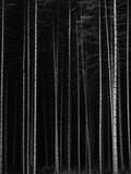 Aspen Forest by Brett Weston Photographic Print by Brett Weston