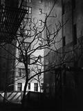 Bare Tree Below Buildings, Manhattan, 1944 Photographic Print by Brett Weston