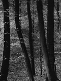 Trees Photographic Print by Brett Weston