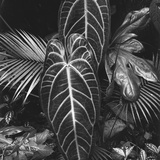 Leaves, Hilo, 1979 Photographic Print by Brett Weston
