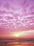 Pink Sunset Over Heceta Beach Fotografie-Druck von Craig Tuttle