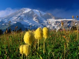 Wildflowers Blooming Beneath a Snowy Mountain Photographic Print by Richard Cummins