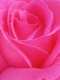Red Rose Petals Photographie par John McAnulty