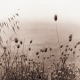 Grasses by the Ocean Photographic Print by Ariel Ruiz I Altaba