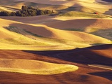 Rolling Wheat and Fallow Fields Lmina fotogrfica por Darrell Gulin