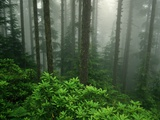 Old Growth Forest Photographic Print by Charles Mauzy