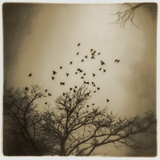 Birds and Trees, Discovery Park Photographic Print by Kevin Cruff
