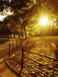 Sunrise in Central Park Photographic Print