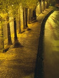 Trees Along the Seine River at Night Photographic Print by Keren Su