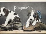 Playmates Photographic Print