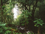 George H.H. Huey - Waimoku Falls and Forest Fotografická reprodukce