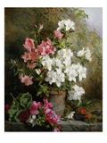 Still Life of Azaleas Impression giclée par Annie Feray Mutrie
