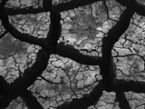 Cracks in Dried Mud Photographic Print by Brett Weston
