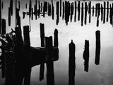 Wood Piles Photographic Print by Brett Weston