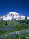 Mount Rainier and Wildflower Meadow Photographic Print by Terry Eggers
