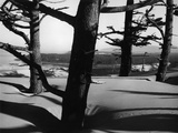 Dunes and Trees, Oregon, 1962 Photographic Print by Brett Weston