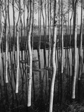 Trees in Shallow Water Photographic Print by Brett Weston