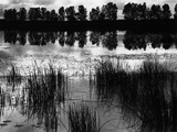 Reeds and Trees, France, 1960 Photographic Print by Brett Weston
