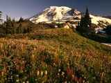 Wildflower Meadow Below Mount Rainier Photographic Print by Stuart Westmorland
