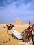 Camel by Great Pyramids Photographic Print by Hisham Ibrahim