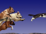 Dogs Chasing Cat Photographic Print by Tim Davis