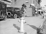 Dog Seated on Fire Hydrant Photographic Print by Bettmann 
