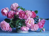 Grussan Achen Felicia and Centenaire de Lourdes Roses Photographic Print by Clay Perry