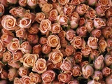 Pink Roses at Albert Kuyp Market Photographic Print by Owen Franken