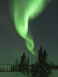 Aurora Borealis in Canada's Wapusk National Park Photographic Print by Daniel Cox