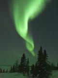 Aurora Borealis in Canada's Wapusk National Park Photographic Print by Daniel Cox