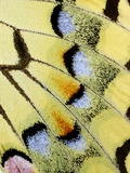 Wing of a Butterfly Photographic Print by Darrell Gulin