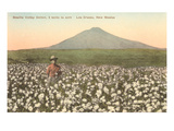 Cotton Field, Las Cruces, New Mexico Poster