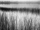 Reeds in Pond with Fog on Horizon Photographic Print by Brett Weston