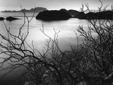 Cliff Overlooking Bay Photographic Print by Brett Weston