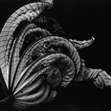 Dead Leaf, Hawaii, 1982 Photographic Print by Brett Weston