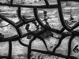 Cracks In Dry Mud Photographic Print by Brett Weston