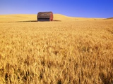Old Barn in Wheat Field, Eastern Washington Photographic Print by Darrell Gulin
