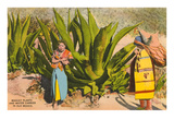 Maguey Plants and Tequila Maker, Mexico Print