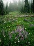 Lupine and Wildflowers Photographic Print by Charles Mauzy